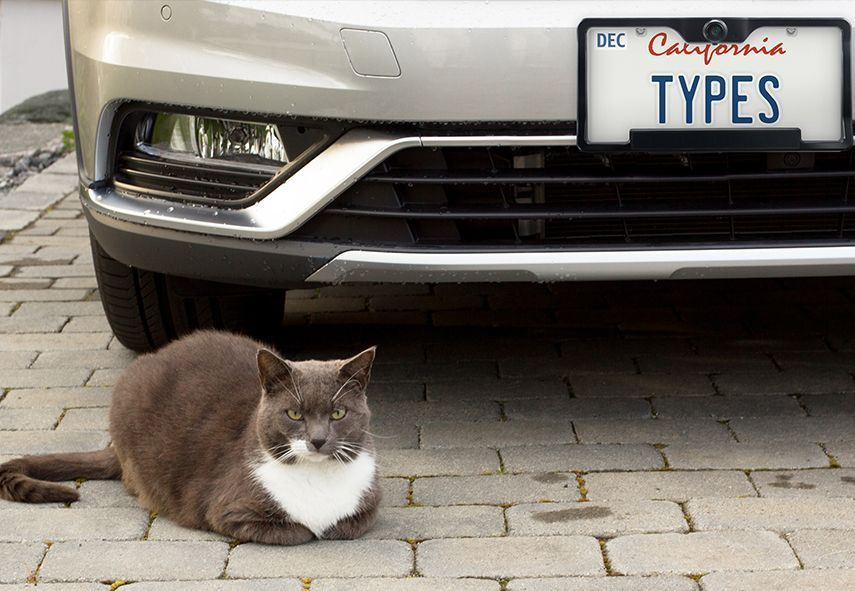 cat infront of the car